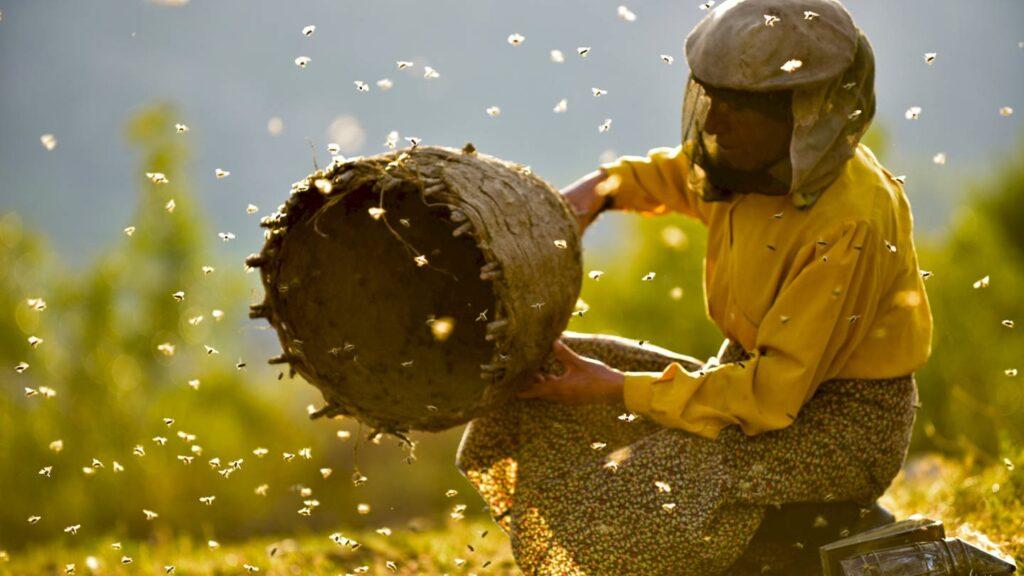 Filmstill Land des Honigs
